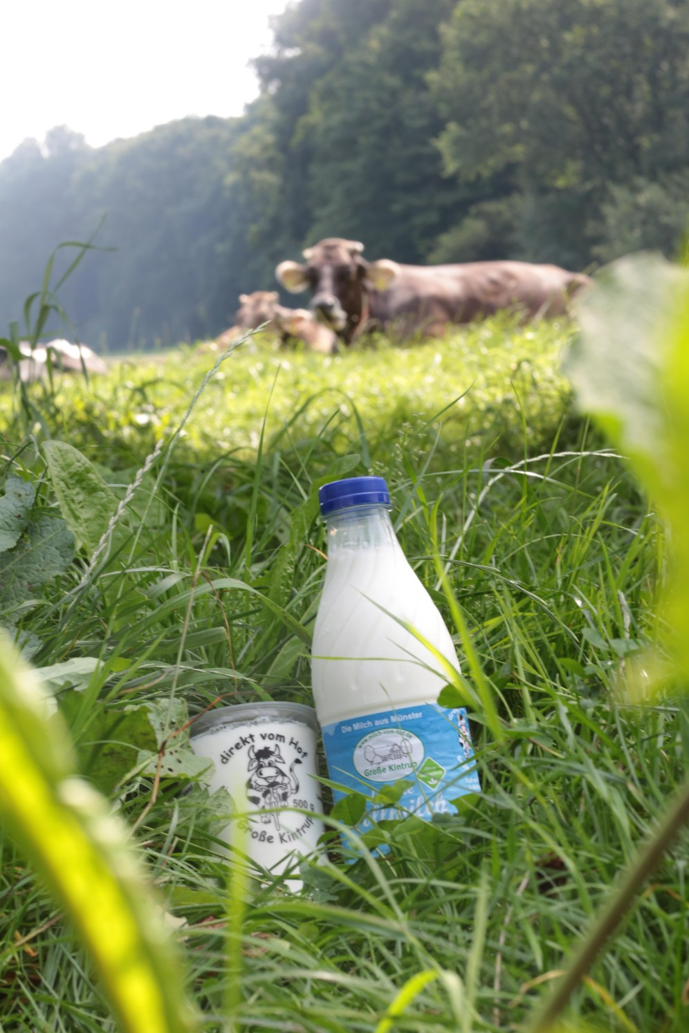 Milch und Joghurt Hof Große Kintrup © Maren Kuiter