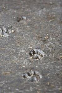 Pfotenabdrücke im Beton © Maren Kuiter