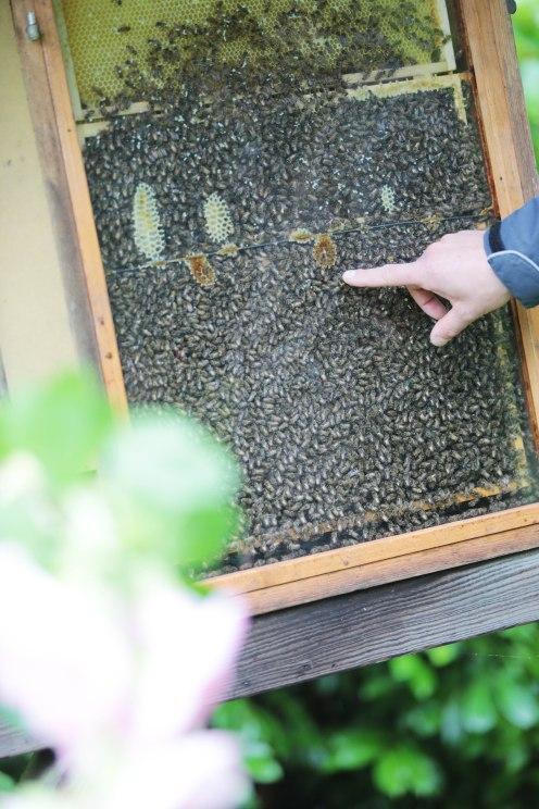 Unzählige Bienen tummeln sich bei Imker Mike Gerdes