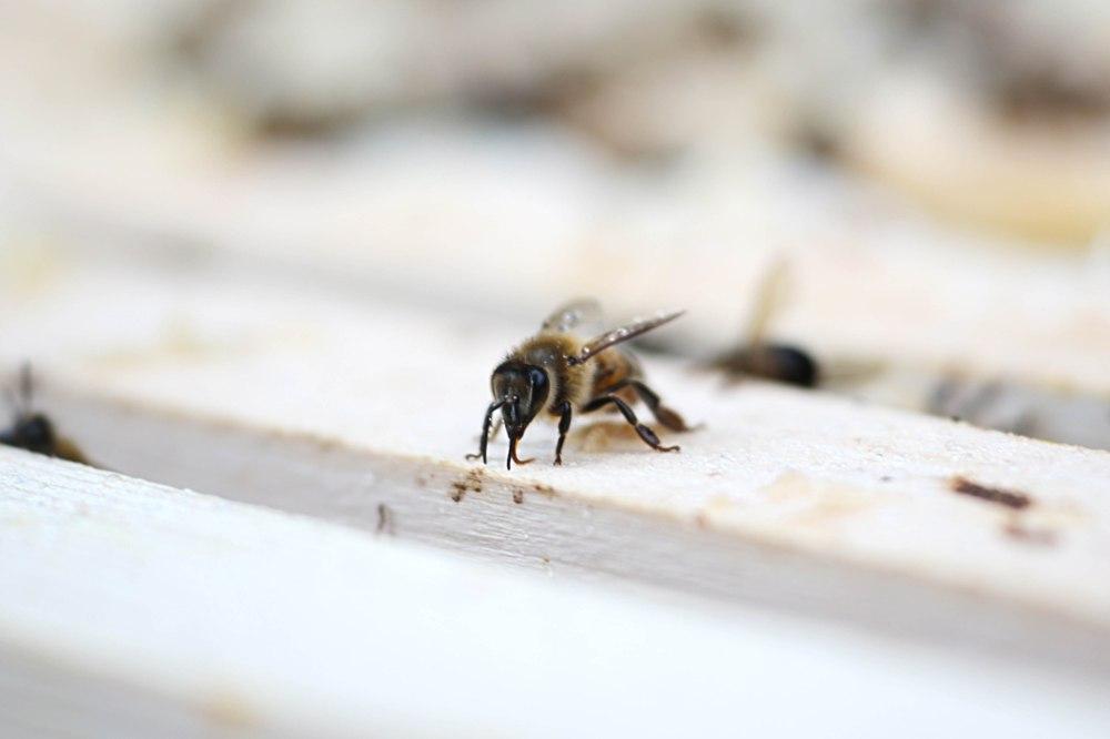 Wenn es aufhört zu regnen, kommen sie Bienen aus den Kästen © Maren Kuiter