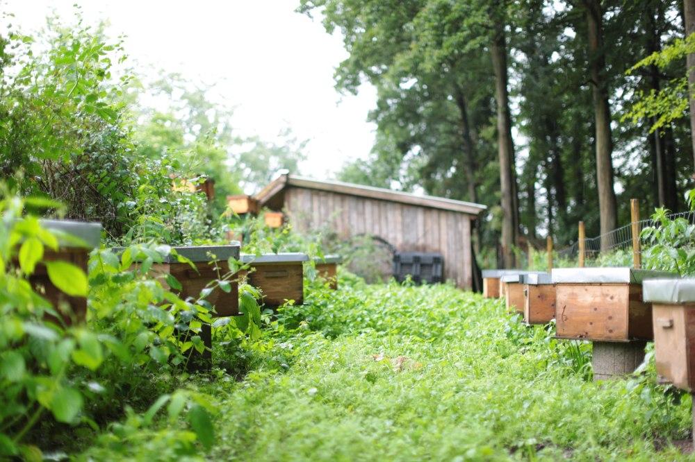 Bienenvolk an Bienenvolk in Hohenholte © Maren Kuiter