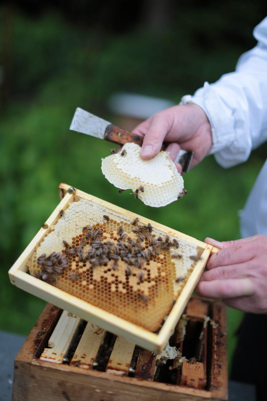 Die Warben sind randvoll mit Honig © Maren Kuiter