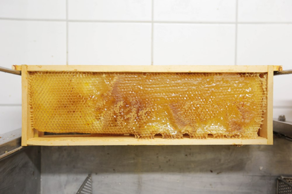 Die Waben werden geöffnet und der Honig herausgeschleudert
