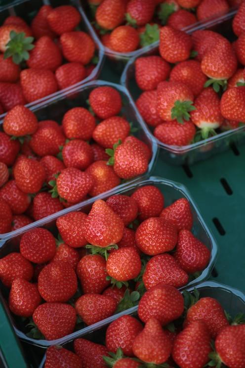 Erdbeeren Hof Grothues-Potthoff