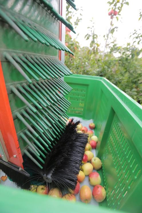 Auffangkorb Apfelernte (2)