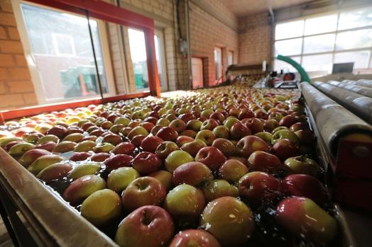 Äpfel im Wasserbad (2)