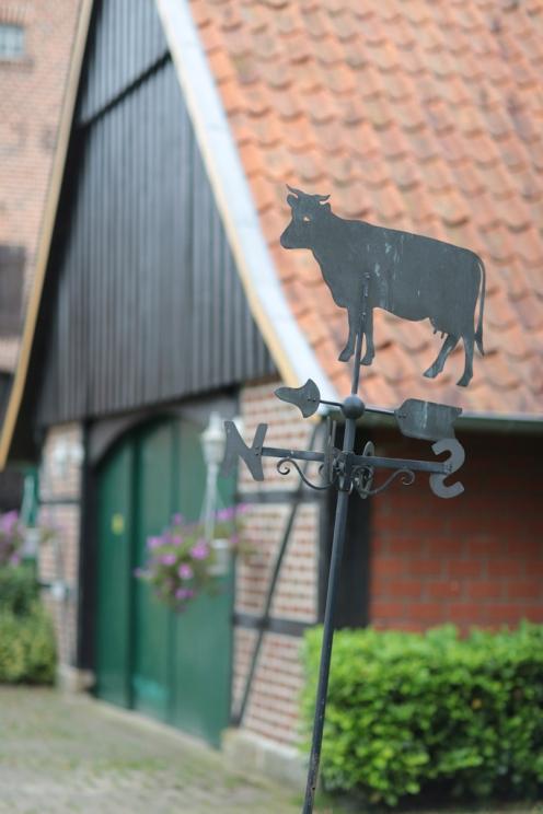 Nordwind ist für Kühe gerade richtig