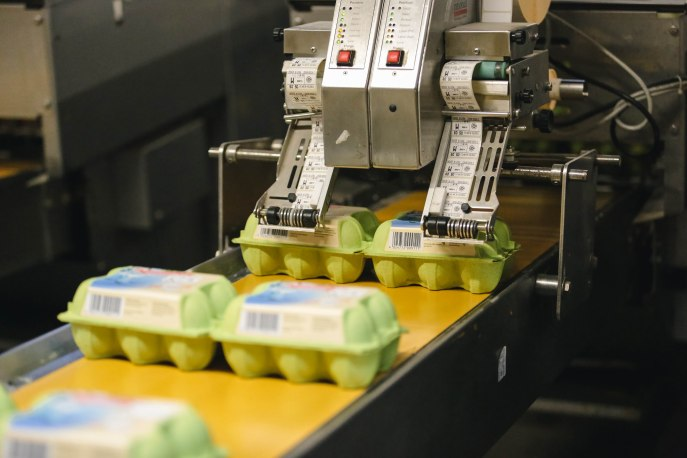 fertig abgepackte Eier