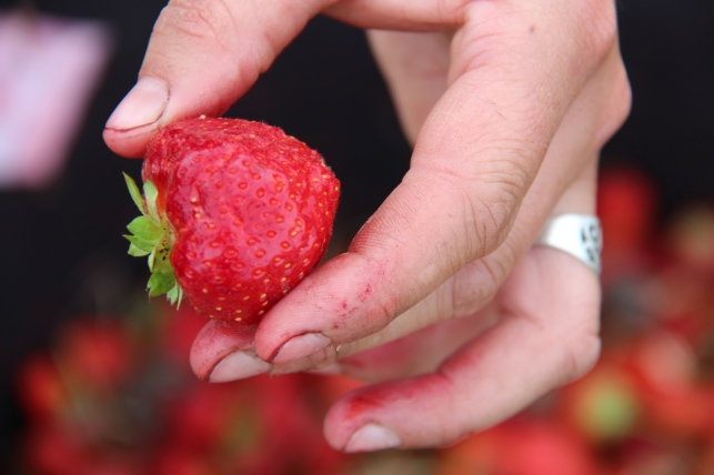 So sehen Erdbeeren aus...