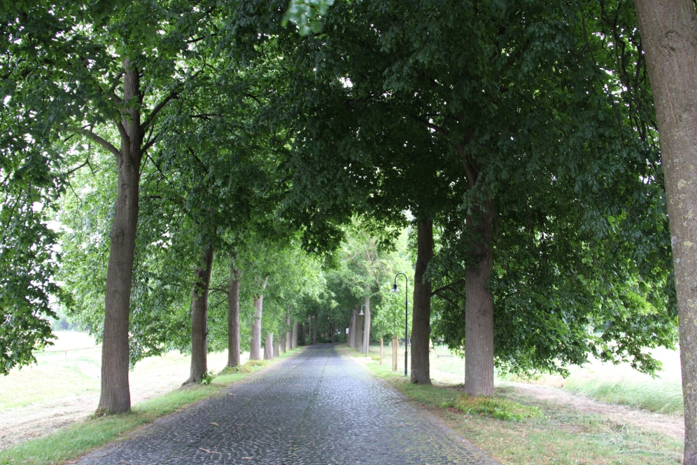 Durch eine wunderschöne Allee geht es zur Marienburg.