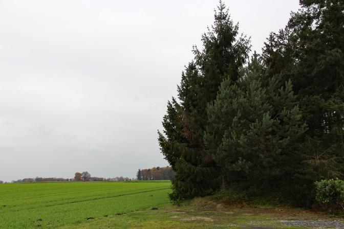 Mersbäumer_16