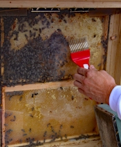 Mit einer Entdeckelungsgabel zeigt Markus Linnenbaum, wie er das Wachs für Kerzen entfernen würde.
